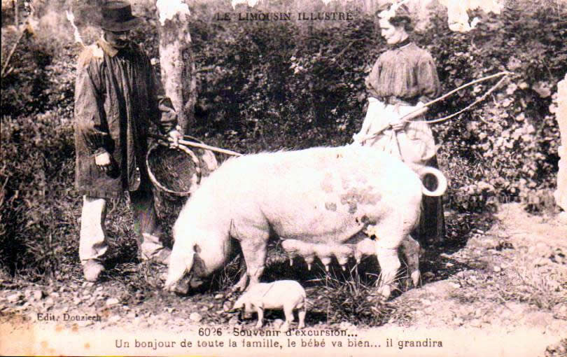 Old postcards tradition Tradition limousin Mestes