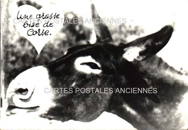 Old postcards animals Bonifacio