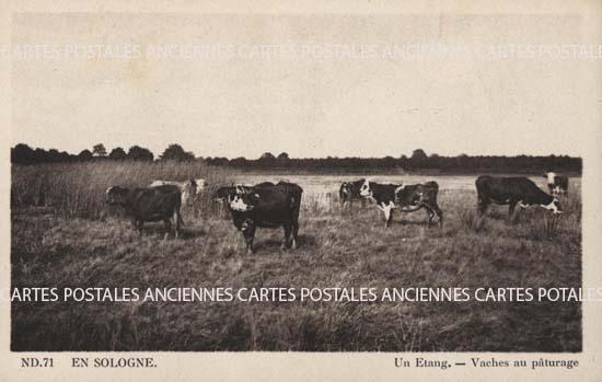 Loir et cher  Pruniers En Sologne