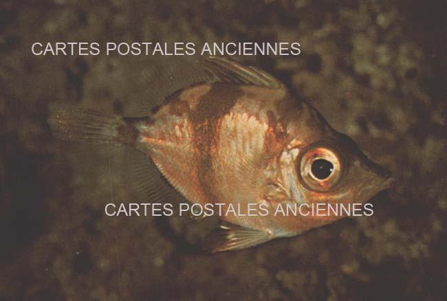 Cartes Postales Anciennes Animaux Poissons Six Fours Les Plages