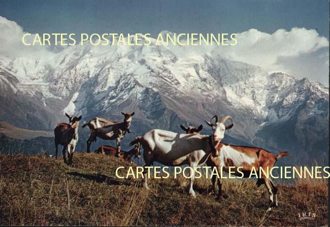 Old postcards animals