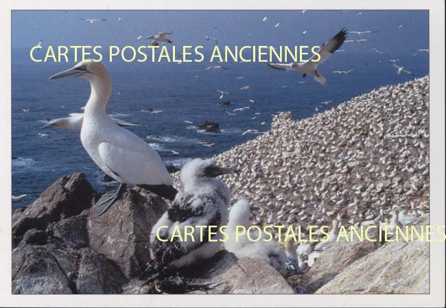 Old postcards animals