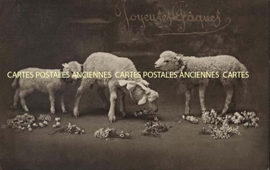Cartes Postales Anciennes Animaux Moutons