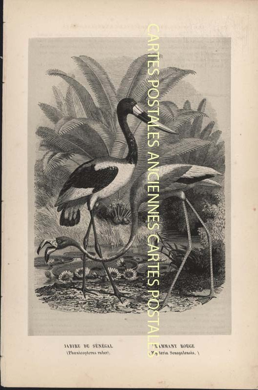 Old postcards fantasy Illustrator Iilustrateur animaux