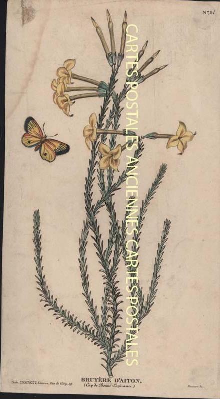 Old postcards fantasy Illustrator Iilustrateur fleurs