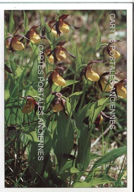 Cartes Postales Anciennes Photos Fleurs