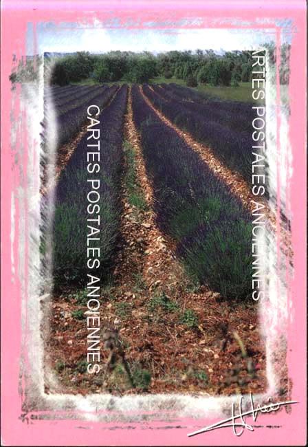 Old postcards landscape Paysage provençal