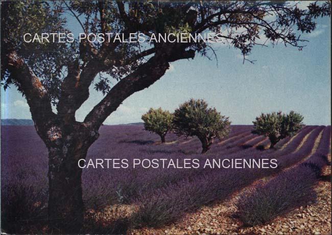 Old postcards landscape Provençal