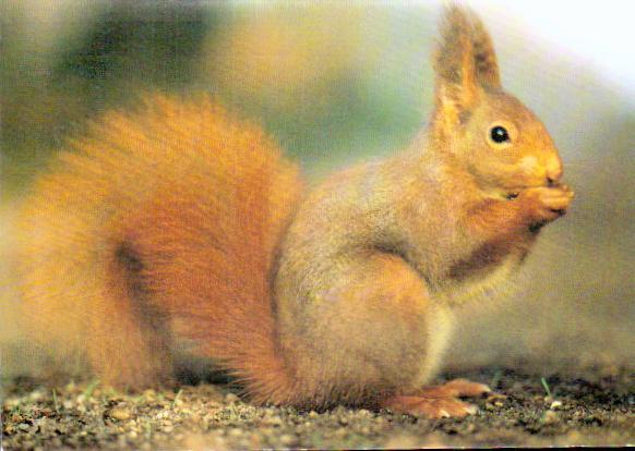 Cartes postales anciennes animaux Fôret