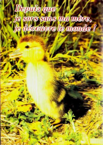 Cartes postales anciennes animaux Basse cour