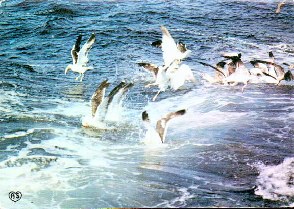 Old postcards animals Birds