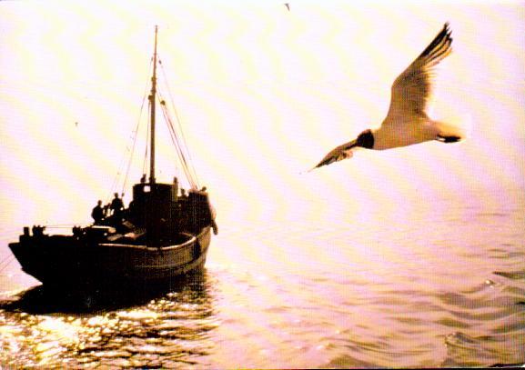 Cartes Postales Anciennes Bâteau mer Pêcheurs
