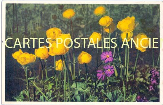 Cartes Postales Anciennes Fantaisie Fleurs
