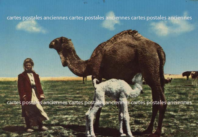 Cartes Postales Anciennes Monde Liban Lebanon