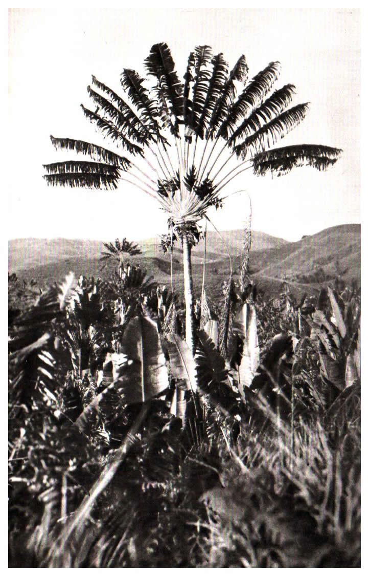 Monde Republic of madagascar Madagascar Tananarive