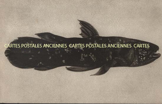 Old postcards world Republic of madagascar  Tananarive